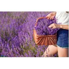 pyhä olavi laventeli